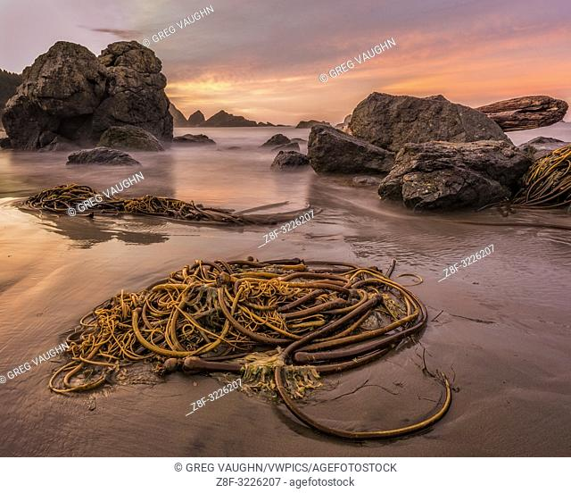 Kelp on the beach at sunrise; Lone Ranch Beach, Samuel H. Boardman State Scenic Corridor, southern Oregon Coast