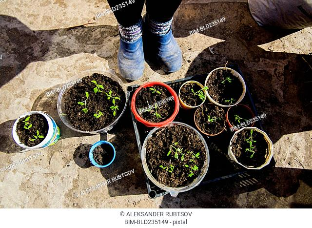 Feet of person standing over tray of seedlings