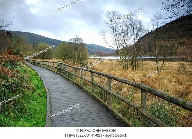 Boardwalk at edge of lake, Lower Lake, Wicklow Way Walking Route, Glendalough Valley, Wicklow Mountains N P , County Wicklow, Ireland, november