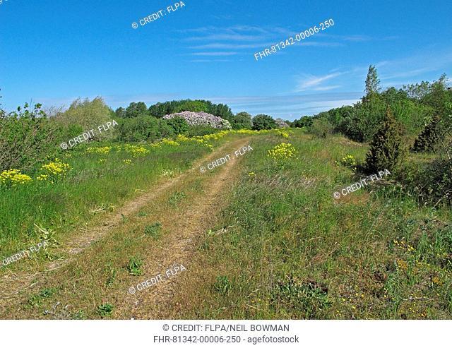 Track on coastal peninsula, Sorve Peninsula, Saaremaa Island, Saare County, Estonia, June