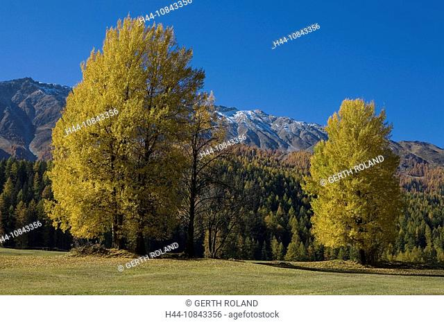 Switzerland, Europe, Fuldera, Larch trees, Yellow, Canton Grisons, Graubunden, Grisons, Autumn, Landscape, Nature, Sce