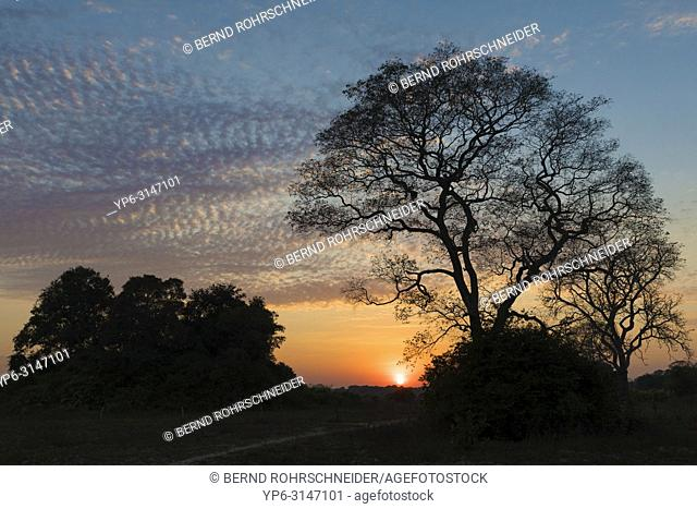 landscape in the Pantanal with trees at sunrise, Mato Grosso, Brazil