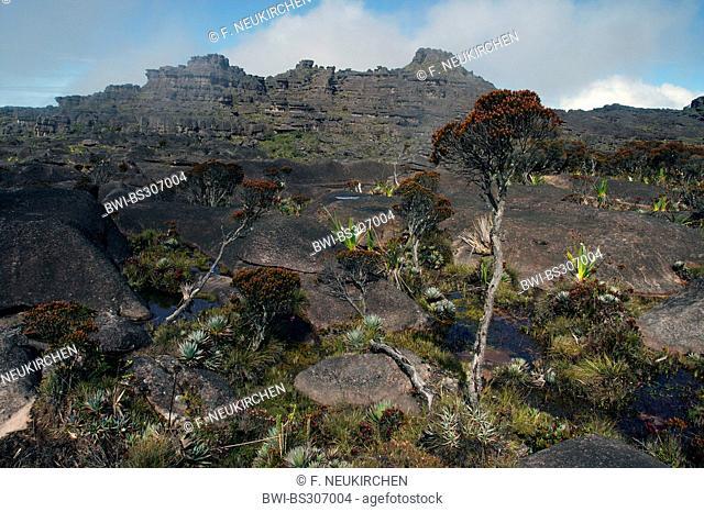 vast rock landscape at the Roraima Tepui, Venezuela, Canaima National Park, Roraima Tepui