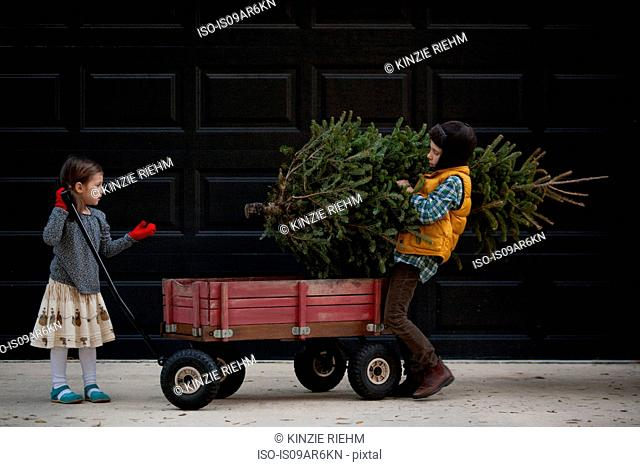 Girl and boy loading cart with christmas tree