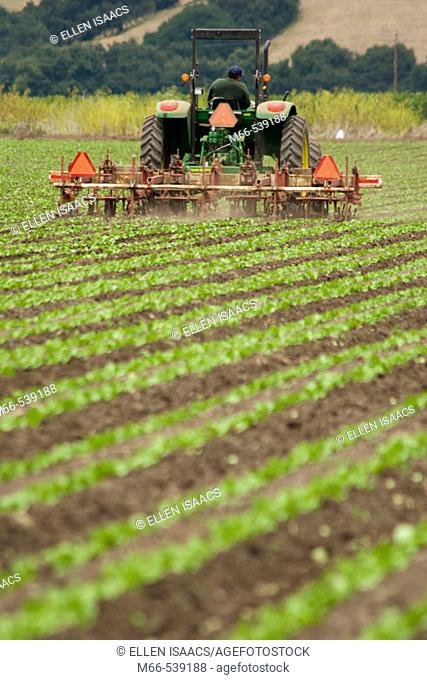 Man driving John Dere tractor through rows of crops in Watsonville, California field