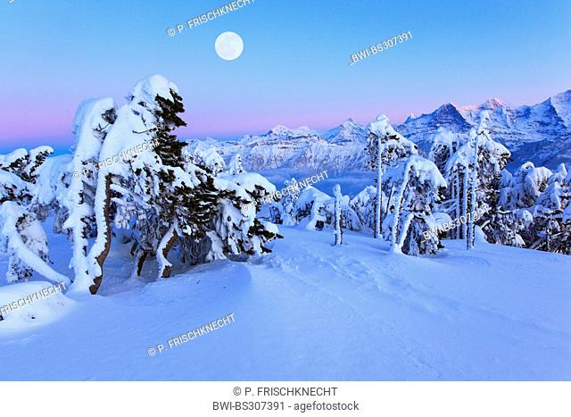view from Niederhorn to Dreigestirn, Eiger, Moench and Jungfrau at full moon, Switzerland, Bernese Oberland, Bernese Alps