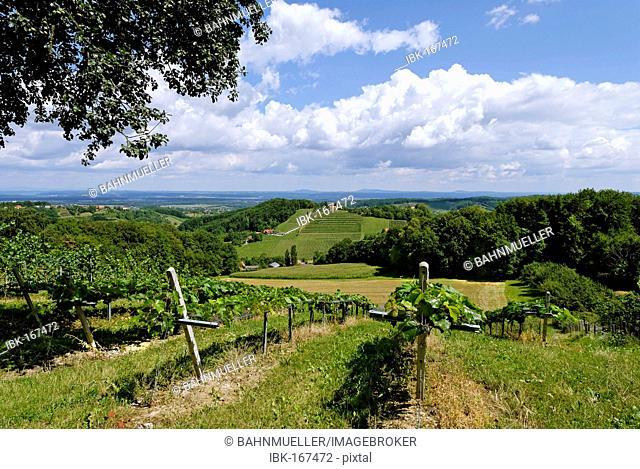 Wineyards near Grasnitzberg at the Styria wine road Styria Austria