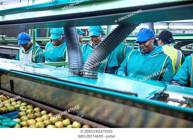Women working in apple factory