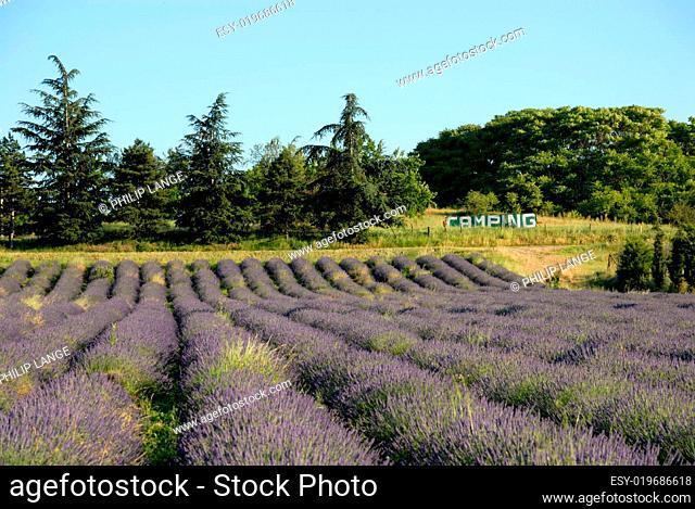 Lavendelfelder und Camping, Frankreich