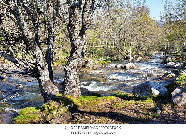Aguilon stream in the Sierra de Guadarrama. Rascafría. Madrid. Spain. Europe