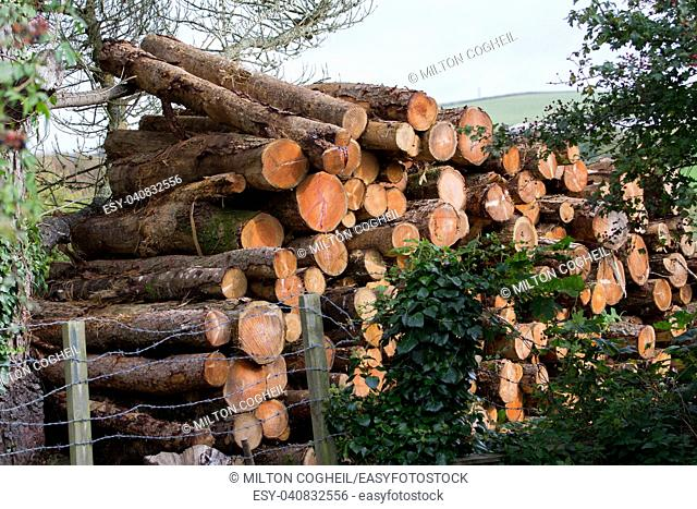 A stack of sawn logs in a field behind a barbed wire fence
