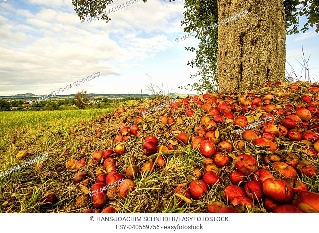 heap of apples at a tree trunk with landscape