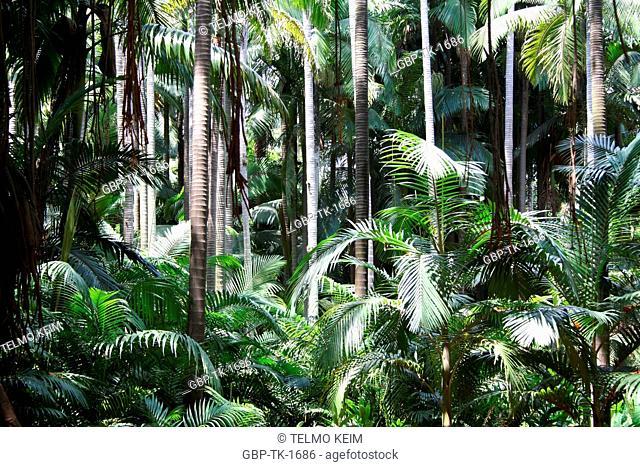 Palm tree foliage, Agua Branca park, São Paulo, Brasil