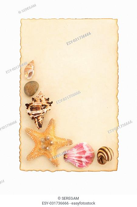 seashell and sea concept isolated on white background