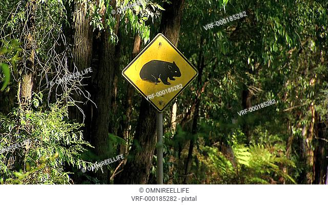 Yellow warning sign with picture of Wombat on post by side of road as cars drive past with trees behind