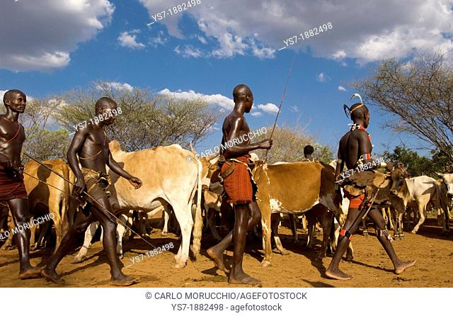 Young Hamer men participating to the traditional bull jumping ceremony, Omo region, Ethiopia, Africa