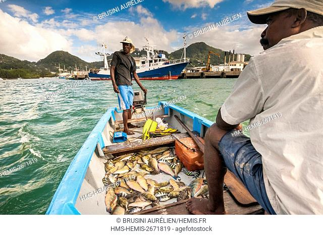 Seychelles, Mahe Island, fishermen getting their fishing trap of braided bamboo filled with fish out of the sea