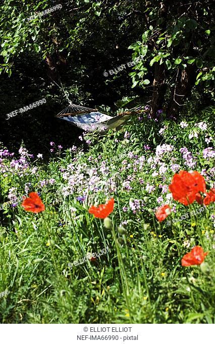 Hammock in a flowery garden Sweden