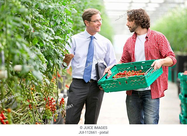 Businessman and grower discussing ripe vine tomatoes in greenhouse