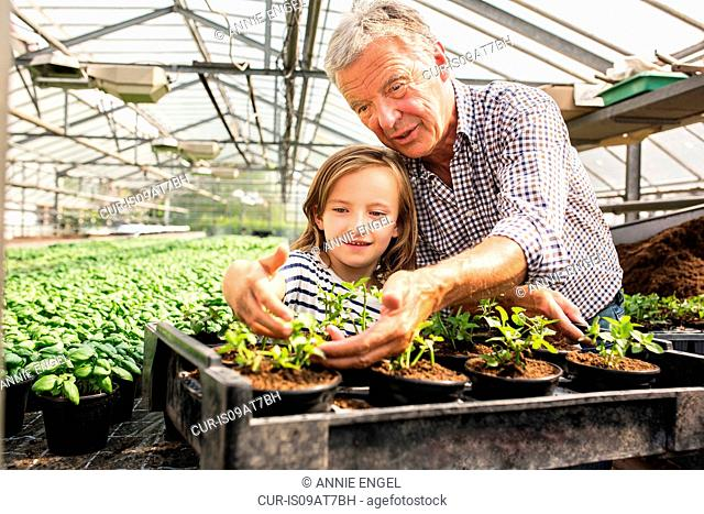 Grandfather arm around granddaughter looking at potted seedlings in hothouse