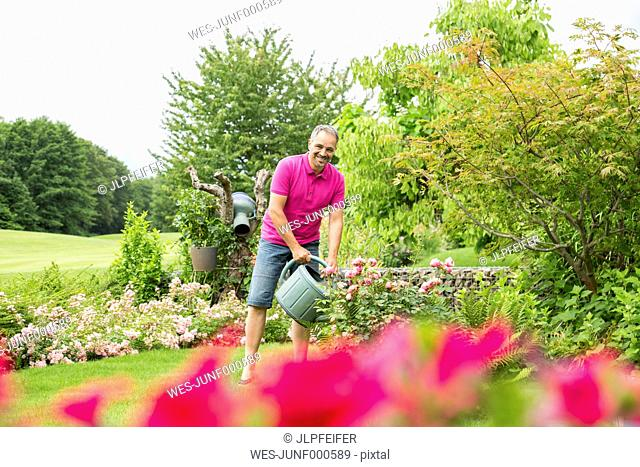 Smiling man watering his roses in the garden