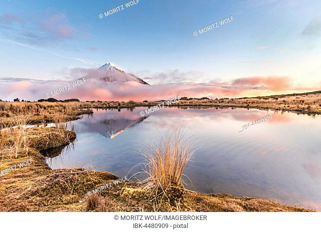Reflection in Pouakai Tarn lake, pink clouds to stratovolcano Mount Taranaki or Mount Egmont at sunset, Egmont National Park, Taranaki, New Zealand