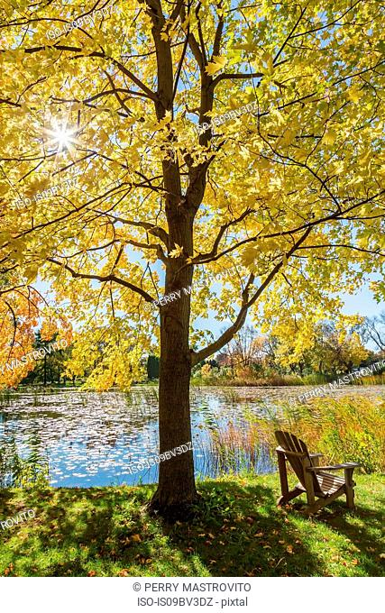 Wooden Adirondack chair on lawn beneath Maple tree, Montreal Botanical Garden, Quebec, Canada
