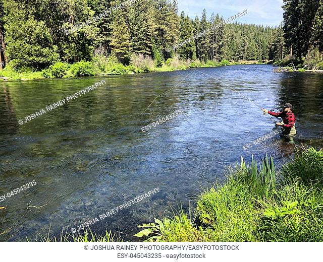 Fly fisherman casting to rising native rainbow trout on the Metolius River near Sisters Oregon