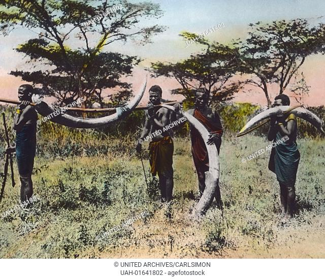 German East Africa (1885 - 1918) - Poachers transporting ivory. Carl Simon Archive, image date circa 1905