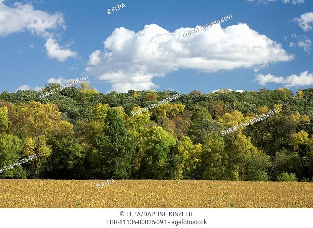 View of trees changing to autumn colour on wooded hillside, with soya bean field in foreground, Fort Ransom, Sheyenne River Valley, Ransom County, North Dakota
