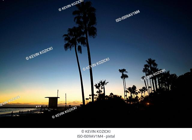 Silhouetted palm trees at sunset, Newport Beach, California, USA