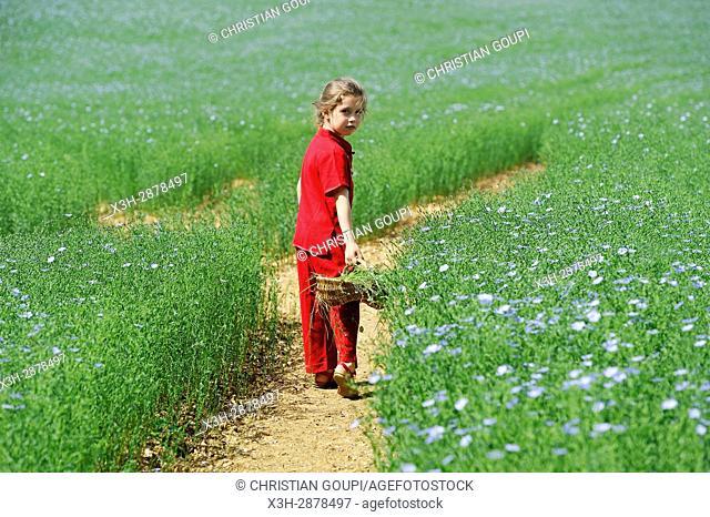 little girl dressed in red in a flax field flowering, Centre-Val de Loire region, France, Europe