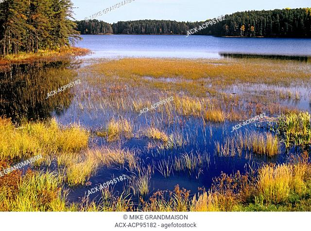 Shoreline of Huronian Lake in autumn, Quetico Provincial Park, Ontario, Canada