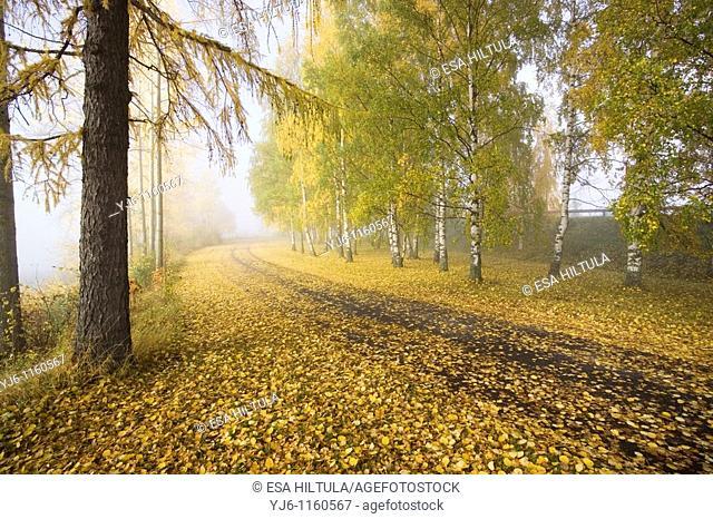 autumn scenery, Finland