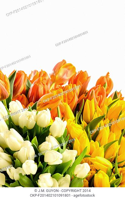 Spring flowers colorful bouquets of tulips on white background