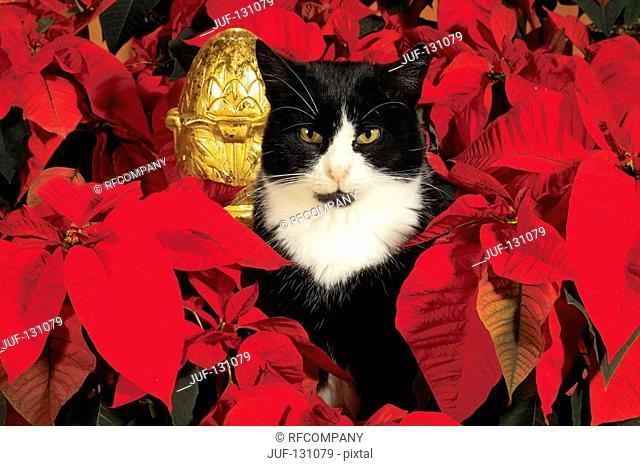 domestic cat between flowers