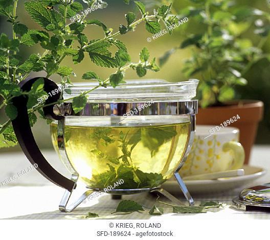Glass pot of lemon balm tea, sprigs of fresh lemon balm