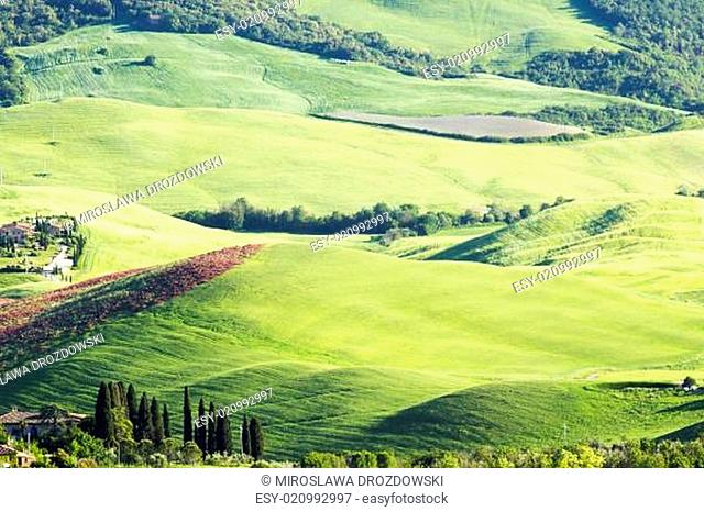 Green typical tuscan landscape in spring time
