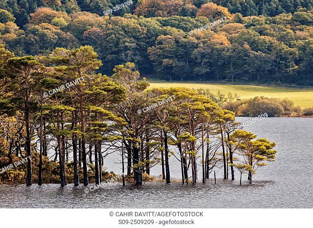 Muckross Lake and Killarney National Park, Muckross, Co. Kerry, Ireland