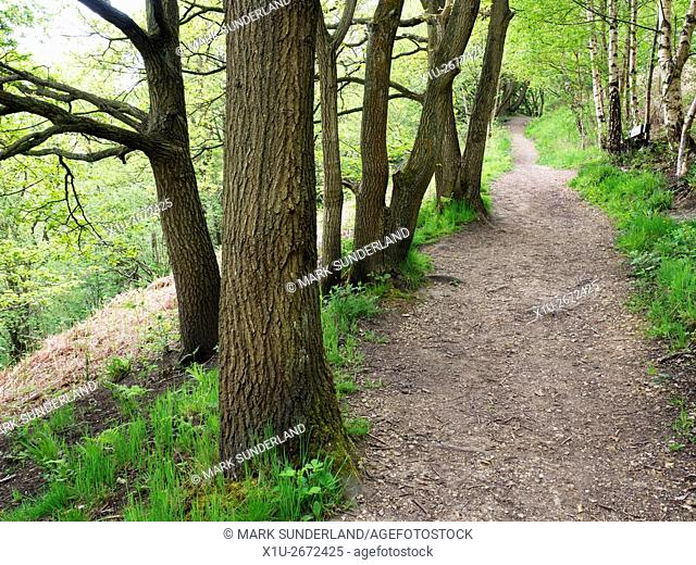 Spring Wood Nidd Gorge Woods Knaresborough North Yorkshire England