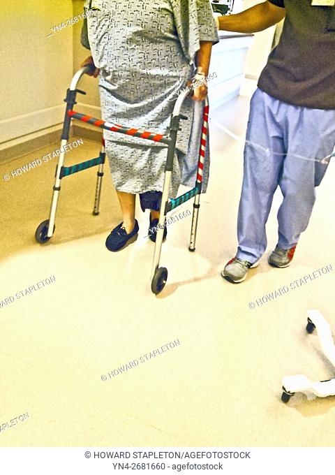 A hospital patient takes her first hallway walk assisted by a physical therapist and a walker just 5-hours following a knee replacement surgery