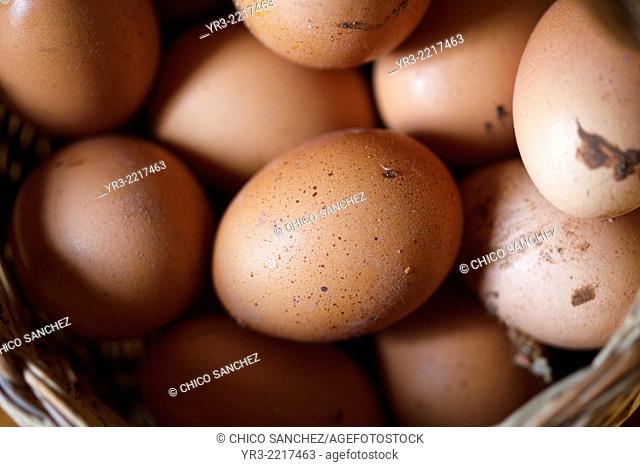 Range chicken eggs in Villaluenga del Rosario, Sierra de Grazalema Natural Park, Cadiz province, Andalusia, Spain