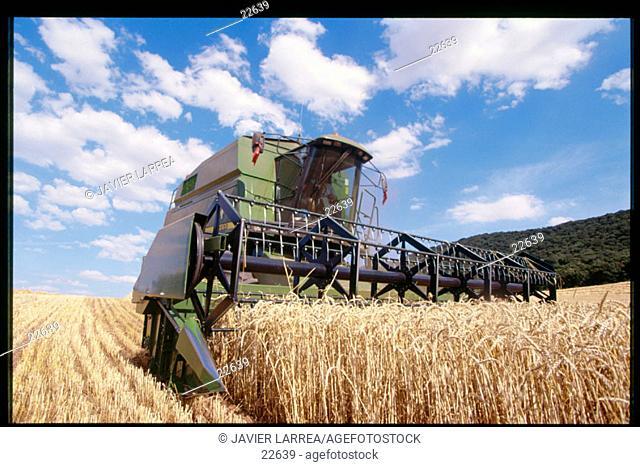 Wheat harvest. Navarre. Spain