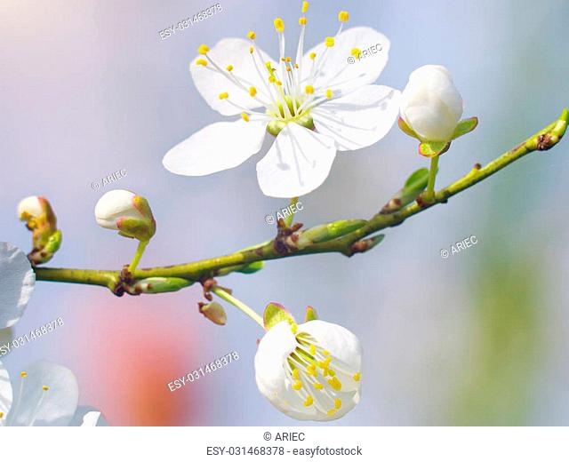 Spring bud flower. Composition of nature