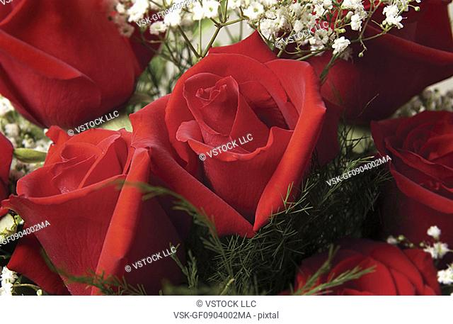 Red roses with babys breath