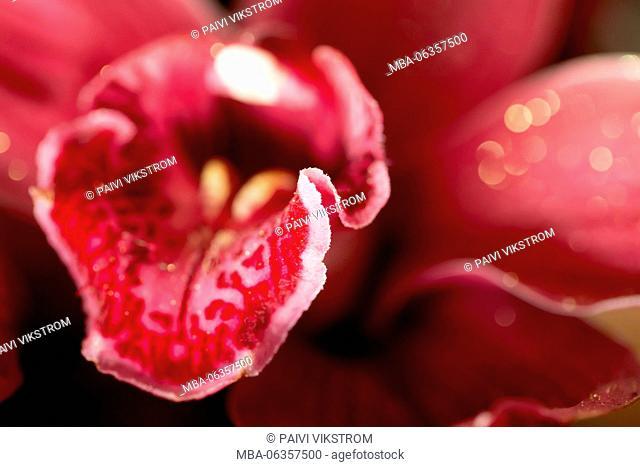 abstract,anniversary,beautiful,beauty,bloom,blossom,blur,bokeh,botany,curve,detail,dreamy,elegance,elegant,floral,florist,flower,fragile,fresh,love,luxury,macro