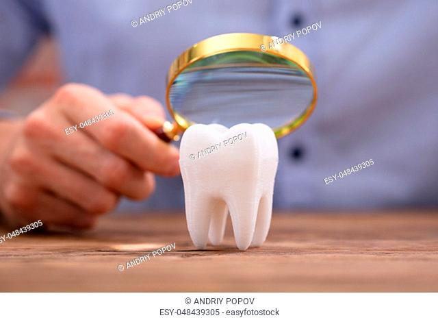 Close-up Of A Person Holding Magnifying Glass Over The Healthy White Tooth On Wooden Desk