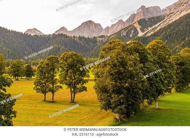 Valley of Ramsau at Dachstein, trees Acer pseudoplatanus, Styria, Austria, Ramsau