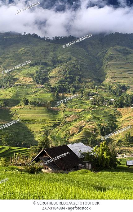 Sunset in the rice terraces nearby of Lao Chai village. Trekking Sapa to Lao Chai. Vietnam