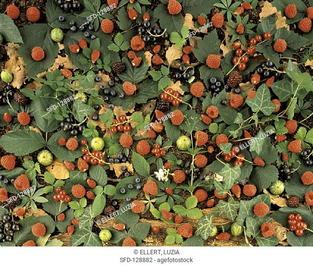 Berries and Leaves on the Ground